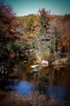 Autumn Stream, New Hampshire
